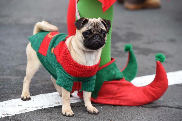 Natale Pug Cafe Manchester