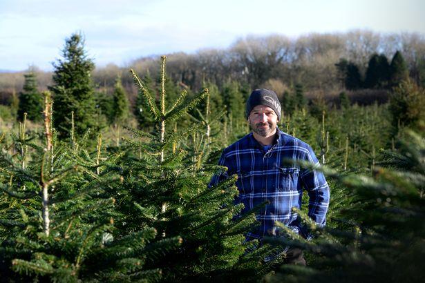 Chrismtas Tree Farm Santa