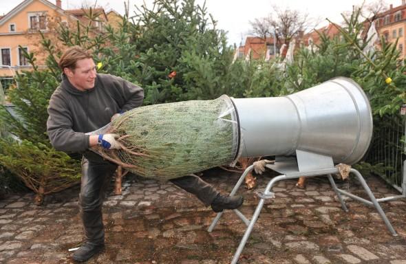 verdadero árbol de navidad