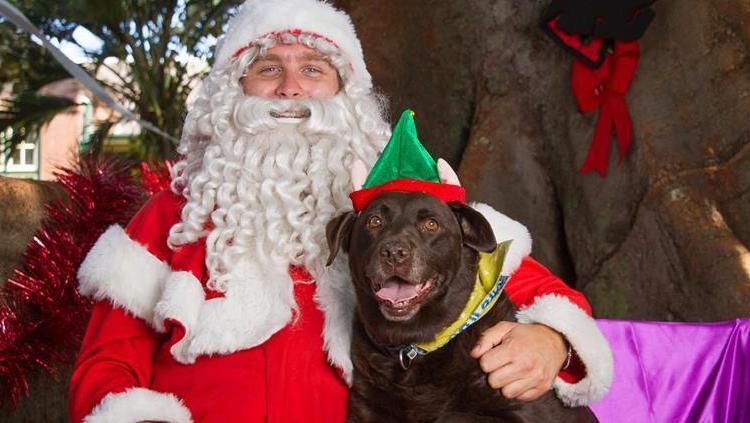 Santa fanget på Santa Cam med en hund